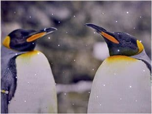 PREMIER FB152066PAIR  40 X 30Cm Snowing Penguin Scene Pair