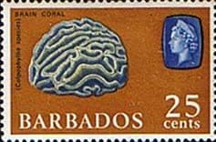 Stamps of Barbados 1965 QE II SG 331 331 Brain Coral Fine Mint SG 330 Scott 275
