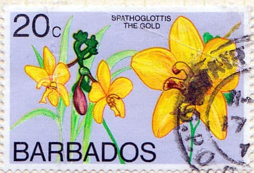 Barbados 1974 Orchids SG 493b Used