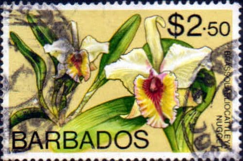 Barbados 1974 Orchids SG 498 Fine Used