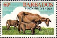 Barbados 1982 Black Belly Sheep SG 695 Fine Mint