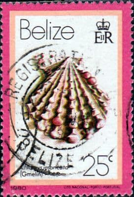Postage Stamps Belize 1980 Shells Fine Used SG 535 Scott 474