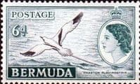 Bermuda 1953 Queen Elizabeth SG 143 White-tailed Tropic Bird Fine Mint