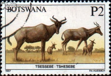 Botswana 1987 Animals SG 636 Fine Used