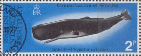 British Antarctic Terratory 1977 Whales Conservation SG 79 Fine Used