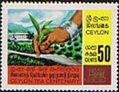 Ceylon 1967 Centenary of Ceylon Tea Industry SG 528 Fine Mint