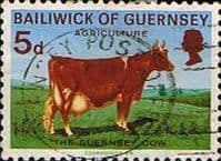 Guernsey 1970 Agriculture and Horticulture Animals Cow SG 37 Fine Used