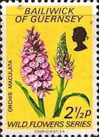 Guernsey 1972 Wild Flowers SG 73 Fine Used