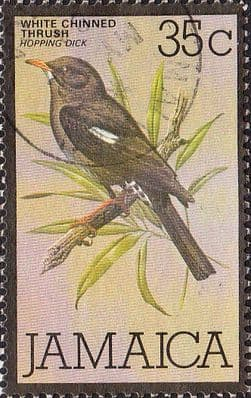 Jamaica 1979 White-chinned thrush Bird SG 471 Fine Used