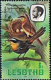 Lesotho 1981 Birds SG 441 Cape Robin Chat Fine Used