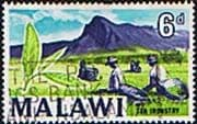 Malawi 1964 SG 220 Tea Plantation Fine Used
