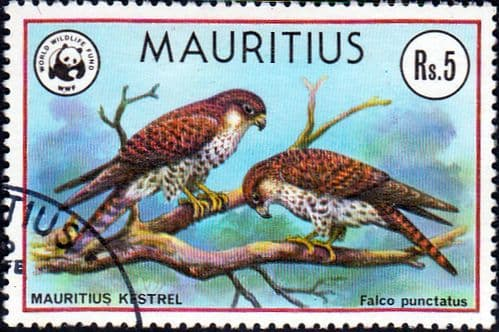 Mauritius 1978 Endangered Species SG 560 Fine Used