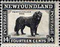 Newfoundland 1932 SG 216 Black Dog Fine Mint