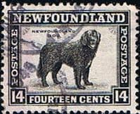 Newfoundland 1941 SG 284 Dog Fine Used