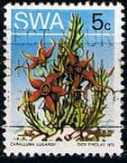 South West Africa 1973 SG 245 Succulents Fine Used
